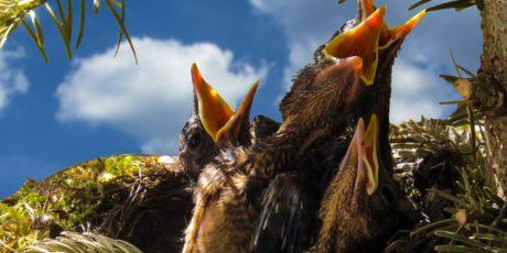 Seasonal Bird Feeding – Spring