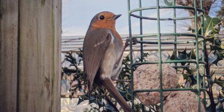 Positioning Bird Feeders