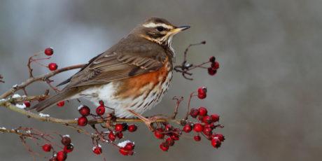 Seasonal Bird Feeding – Autumn